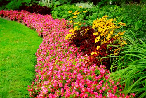 Mantenimiento de jardines y tratamiento del picudo rojo for Mantenimiento de jardines