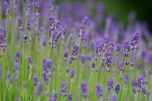 suministro plantas alicante jardineria